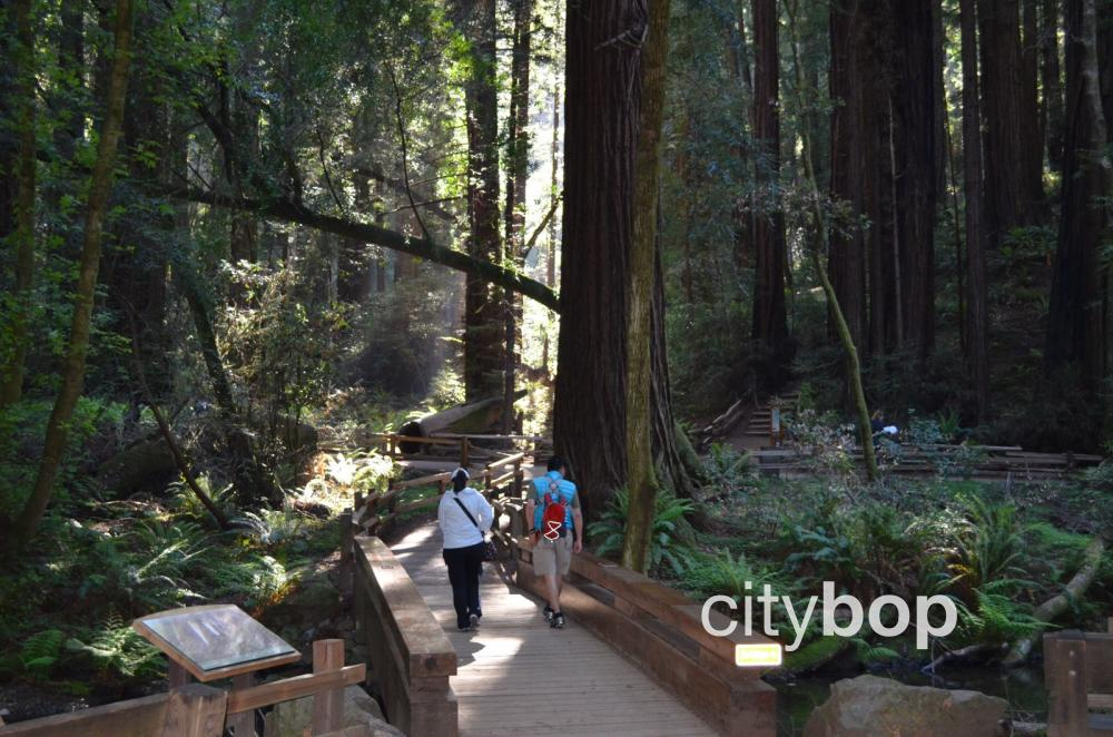 Muir Woods trails
