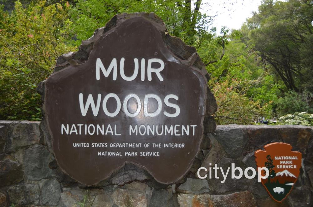 Muir Woods log sign
