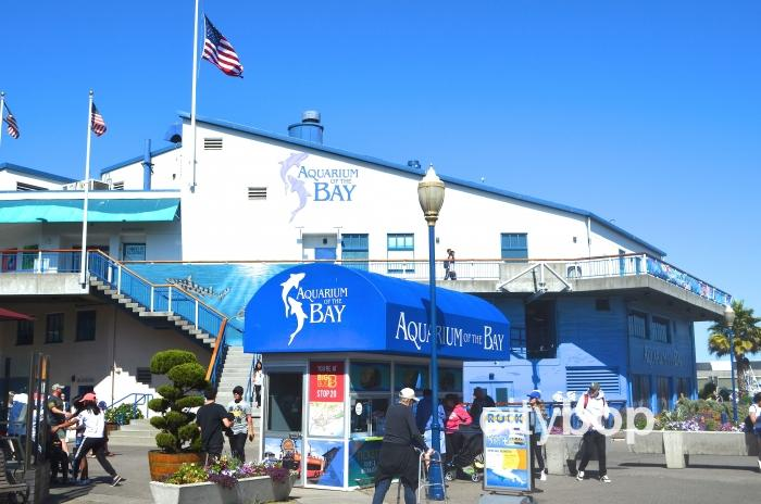 10 BEST Attractions at Aquarium of the Bay