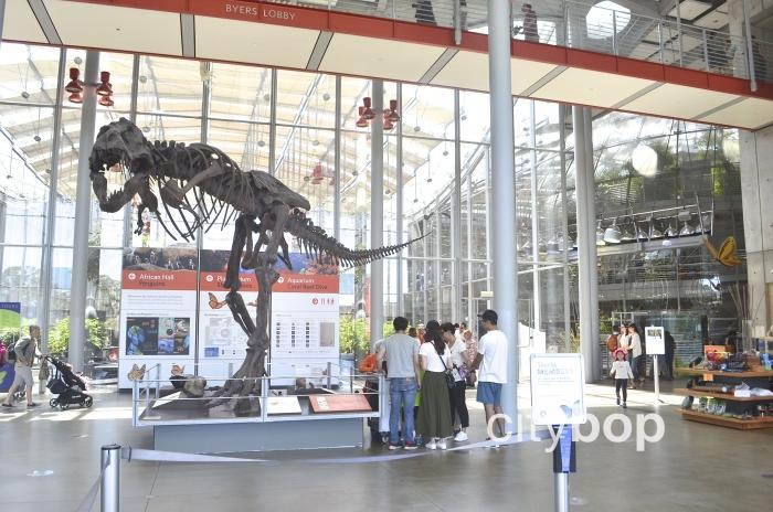 10 BEST Attractions at California Academy of Sciences