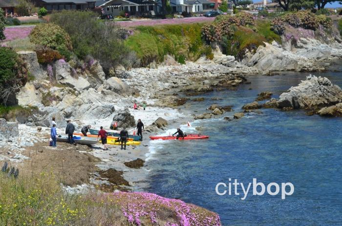 Monterey Kayaking