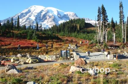Paradise Mt Rainier