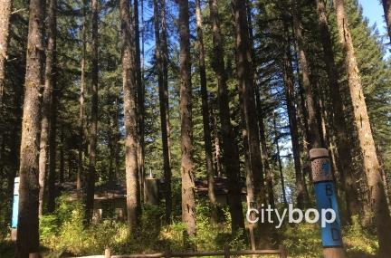 Silver Falls Nature Play Area