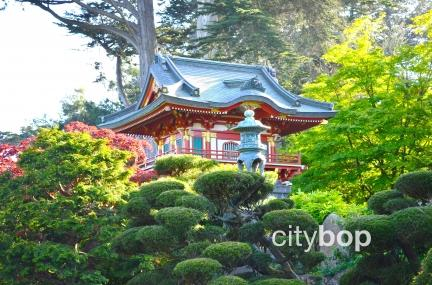 Japanese Tea Garden San Francisco